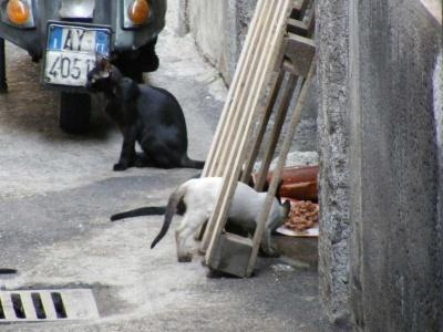 Colonia felina in vicolo Mauro (CT)