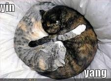 Yin e Yang felino
