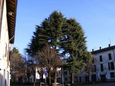 Gli alberi del mio paese