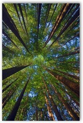 Le visualizzazioni: esercizio III┬░. Il perdono nella foresta