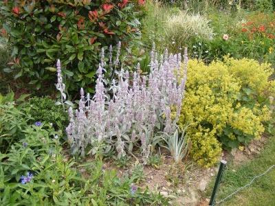 Minuscolo giardino