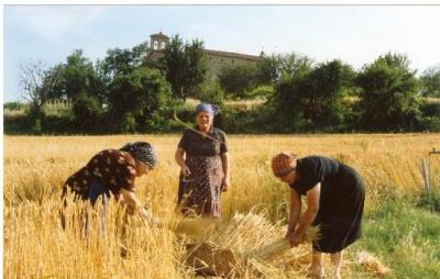 Lughnasadh: la festa del raccolto